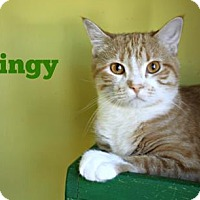 Adopt A Pet :: Gingy - West Des Moines, IA