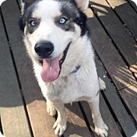Adopt A Pet :: Diesel - Atlanta, GA