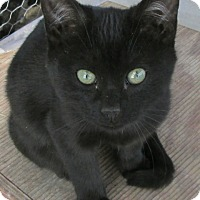 Adopt A Pet :: Prima - Buhl, ID
