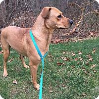 Adopt A Pet :: Emma - Harmony, Glocester, RI