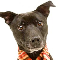 Adopt A Pet :: AMMO - Orlando, FL