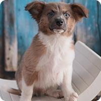 Adopt A Pet :: Bowie - Parsippany, NJ