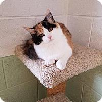 Adopt A Pet :: Fluffy - Crossville, TN