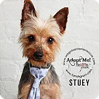 Adopt A Pet :: Stuey - Omaha, NE