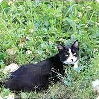 Adopt A Pet :: Annabell - Bonita Springs, FL