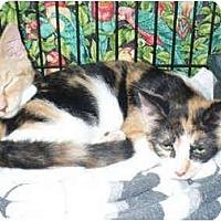 Adopt A Pet :: Judy - Colmar, PA
