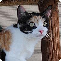 Adopt A Pet :: Duchess - Palmdale, CA