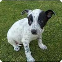 Adopt A Pet :: Kimmy - Bakersfield, CA