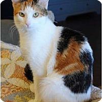 Adopt A Pet :: Muffin - Palmdale, CA