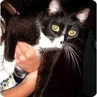Adopt A Pet :: Monique - Troy, OH
