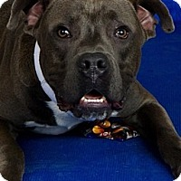 Adopt A Pet :: Earl - New orleans, LA