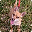 Adopt A Pet :: Monty