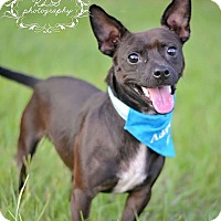 Adopt A Pet :: Peanut - Fort Valley, GA