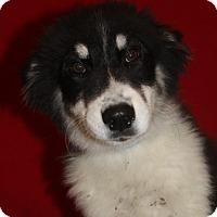 Adopt A Pet :: Louis - Waldorf, MD