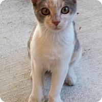 Adopt A Pet :: Christine - Whittier, CA