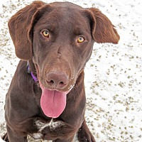 Adopt A Pet :: Farley - Meridian, ID