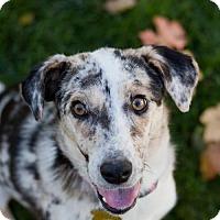 Adopt A Pet :: Fynlee - Salt Lake City, UT