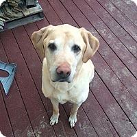 Adopt A Pet :: Nitro #2 - Buckeystown, MD