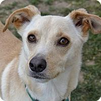 Adopt A Pet :: Buck - Meridian, ID
