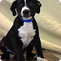 Adopt A Pet :: Tyler - Waldorf, MD