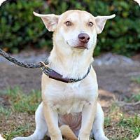 Adopt A Pet :: Vollmer - San Diego, CA