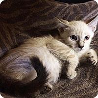 Adopt A Pet :: Gabriella - Metairie, LA