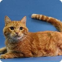 Adopt A Pet :: Clever Bob - Overland Park, KS