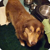 Adopt A Pet :: Dandy - Hainesville, IL