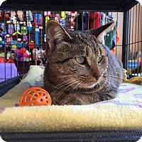 Adopt A Pet :: Willow - Woodstock, ON