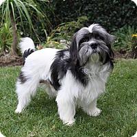 Adopt A Pet :: CONCORD - Newport Beach, CA