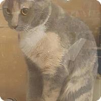 Adopt A Pet :: Muffin - Griffin, GA