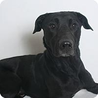 Adopt A Pet :: Yroc - Redding, CA