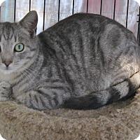 Adopt A Pet :: Dexter - Somerset, KY