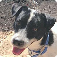 Adopt A Pet :: George - Wimberley, TX