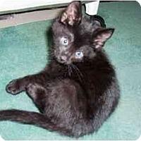 Adopt A Pet :: JMC-05-1-1 - Davis, CA