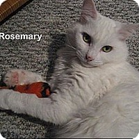 Adopt A Pet :: Rosemary - Portland, OR