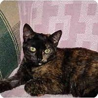 Adopt A Pet :: Kaluha - Mission, BC