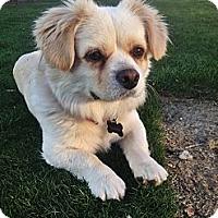 Adopt A Pet :: Pudge - Fowler, CA