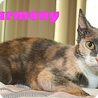 Adopt A Pet :: Harmony - East Stroudsburg, PA