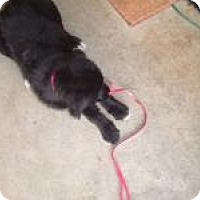 Adopt A Pet :: Milo - Stafford Springs, CT