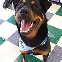 Adopt A Pet :: Bradley - Chicago, IL