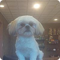 Adopt A Pet :: Danny Boy - River Falls, WI