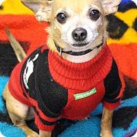 Adopt A Pet :: Paul - Grafton, MA