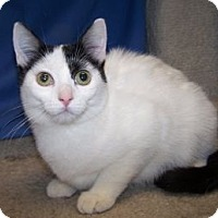 Adopt A Pet :: K-Fielding3-Marnie - Colorado Springs, CO