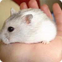 Adopt A Pet :: Buckwheat - Bensalem, PA