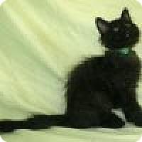 Adopt A Pet :: Kami - Powell, OH