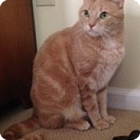 Adopt A Pet :: Bently - Germansville, PA