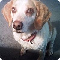 Dog Rescues In Fredericksburg Va