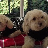 Adopt A Pet :: Pepper Ann & Maxson*Adopted - Gainesville, FL