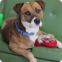 Adopt A Pet :: Echo - Dalton, GA